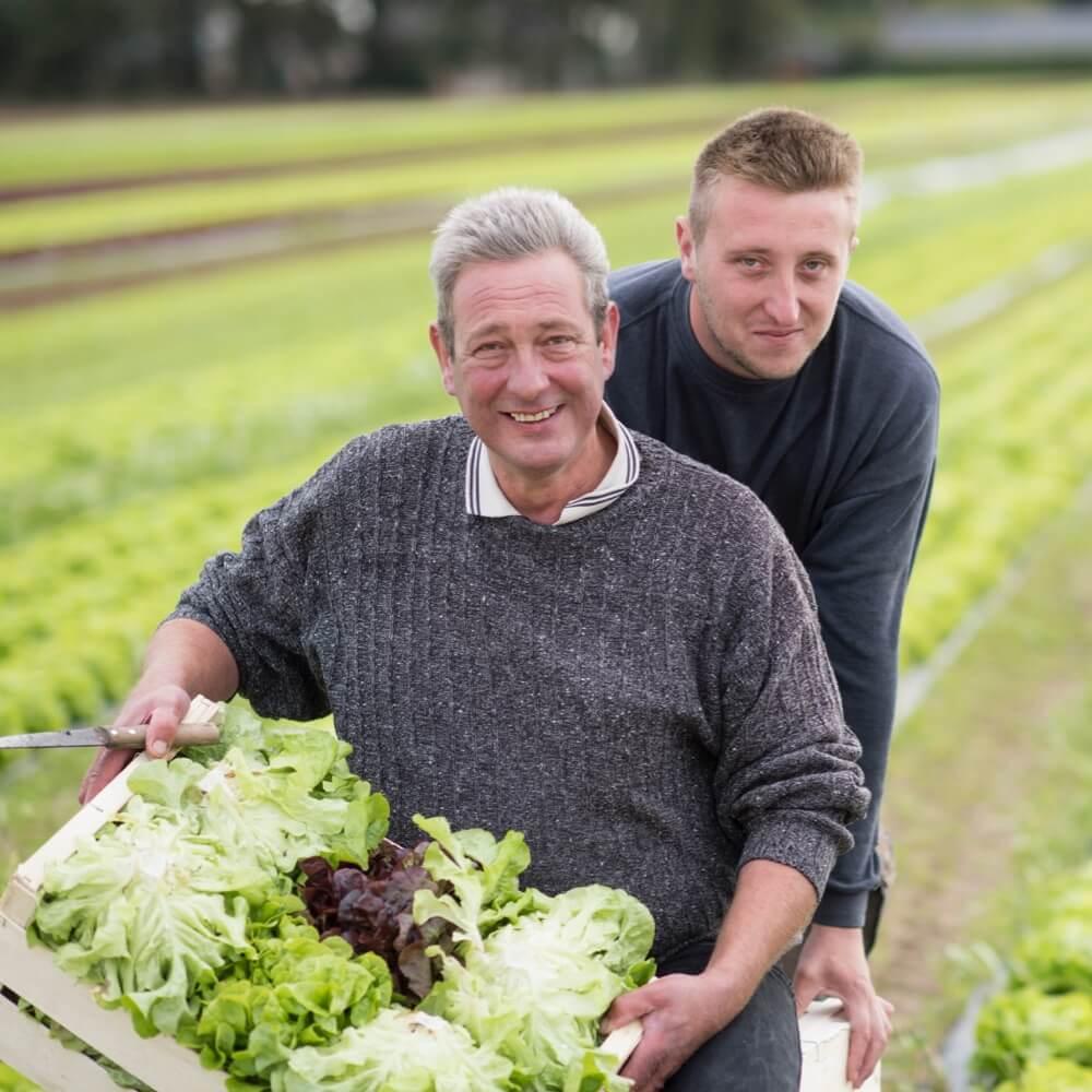 Producteurs de salades Les jardins de Louis