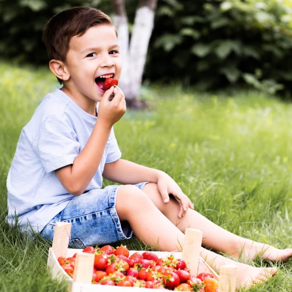 garçon mange des fraises bio dans verger fruits local