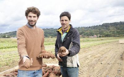 La patate douce a de l'avenir à Longueuil Sainte-Marie