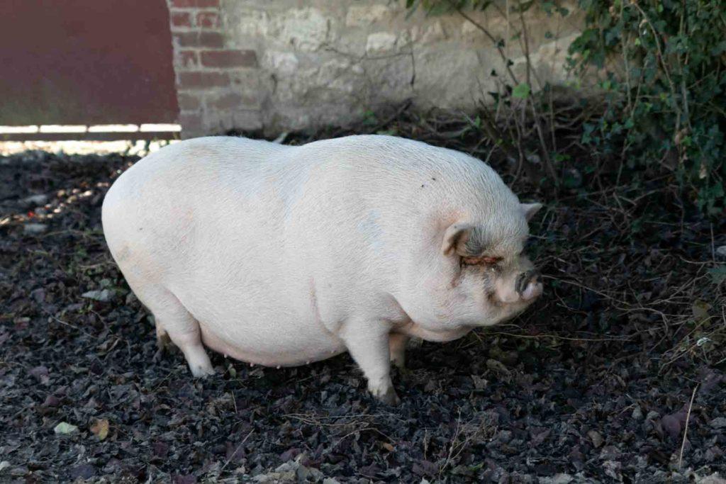 Aux vergers de Sennevière, on est sur une exploitation agricole qui favorise la vie, les animaux sont chez eux