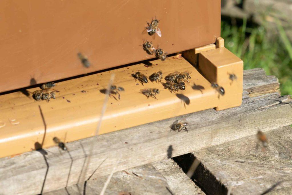 les ruches d'Alexandre permettent d'assurer une pollinisation naturelle